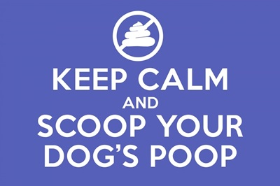 Keep Calm - Scoop - Blue