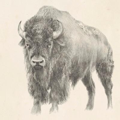 Western Bison Study