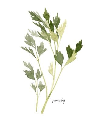 Herb Garden Sketches II