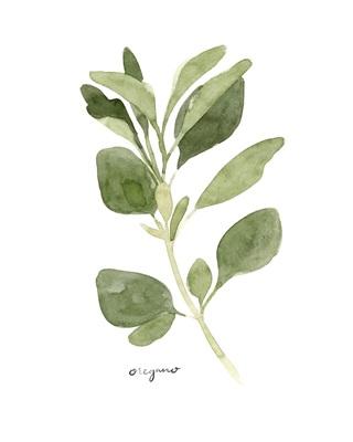Herb Garden Sketches III