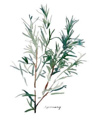 Herb Garden Sketches IV