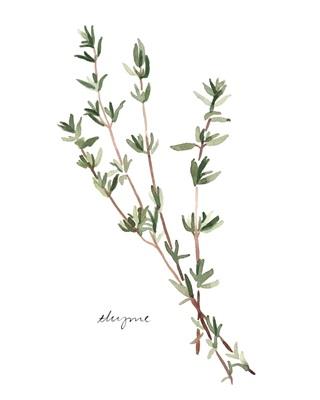 Herb Garden Sketches VI